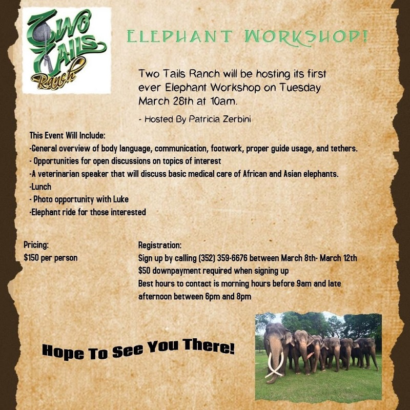 elephantworkshop2017